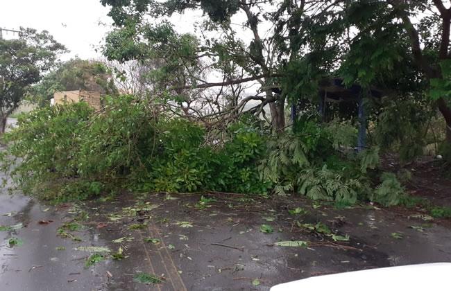 Ventos fortes derrubam árvores em Varginha; Mulher é atingida por telha - Varginha Online
