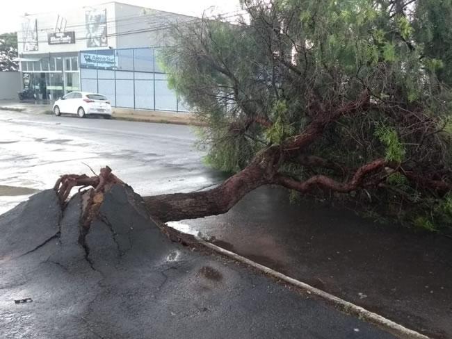 Temporal em Varginha teve rajadas de vento de até 75 km/h; Cemig alerta população para cuidados - Varginha Online